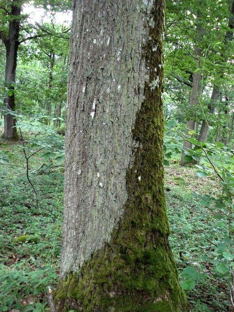 Les quatre saisons printemps page 8 - Mousse sur les arbres ...